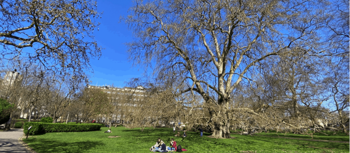 photo of the central gardens of Brunswick Square
