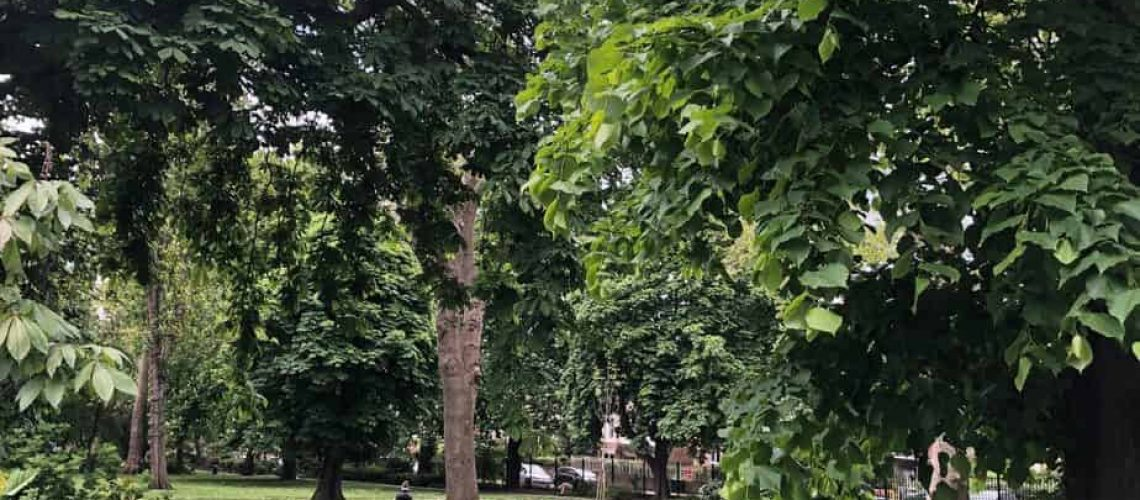 Camden Square from the east, (c) Elena Paolini, 2021